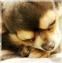 高齢犬医療について